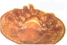 Damaged Varroa mites